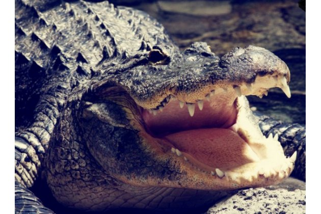 """Роскошный эксклюзивный чехол с фактурной прошивкой рельефа кожи крокодила и визитницей черный для  lg g5 se h845 / h860n / h850 5.3"""" . только в нашем магазине. количество ограничено"""