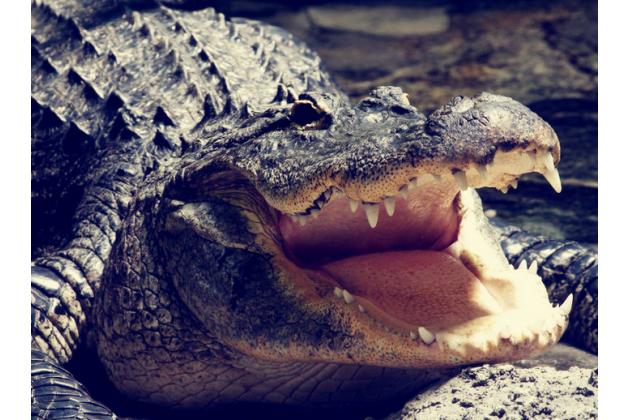 """Элегантная экзотическая задняя панель-крышка с фактурной отделкой натуральной кожи крокодила кофейного цвета для  lg k10/ к10 lte k410 / m2 5.3"""" . только в нашем магазине. количество ограничено"""