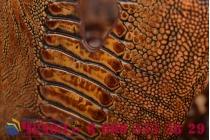 Элегантная экзотическая задняя панель-крышка с фактурной отделкой натуральной кожи крокодила кофейного цвета для lenovo k80/p90/p90 pro . только в нашем магазине. количество ограничено.