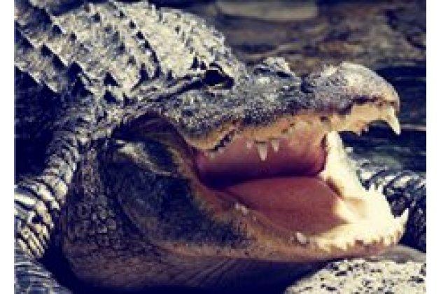 """Роскошная эксклюзивная накладка с объёмным 3d изображением рельефа кожи крокодила коричневая для sony xperia c6 / c6 ultra / xa ultra 6.0"""" (f3212 /f3216). только в нашем магазине. количество ограничено"""