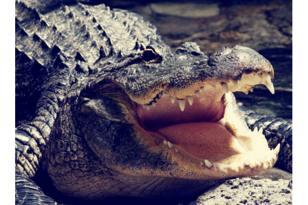 """Элегантная экзотическая задняя панель-крышка с фактурной отделкой натуральной кожи крокодила кофейного цвета для sony xperia z5 / z5 dual sim e6603/e6633 5.2"""". только в нашем магазине. количество ограничено."""