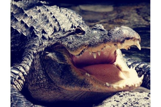 """Роскошный эксклюзивный чехол с объёмным 3d изображением кожи крокодила синий для oneplus 3t a3010/ oneplus 3 a3000 / a3003"""" . только в нашем магазине. количество ограничено"""